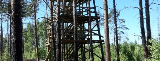 Pääsküla rabaraja vaatlustorn is one of todo.