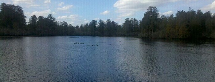 Lettuce Lake Park is one of Best of South Tampa Outdoors.