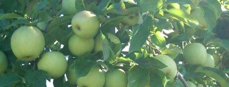 Wilkens Fruit & Fir Farm is one of The Big Apple.