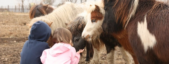 Little America Miniature Horses is one of ATX.