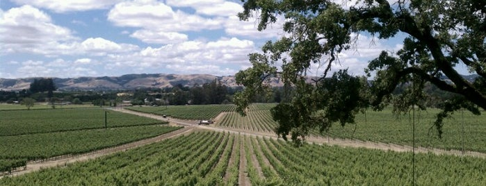 Scribe Winery is one of Lugares guardados de Lauren.
