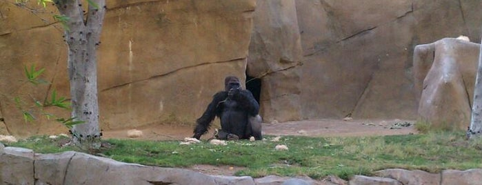 Gorilla Activity Center is one of Home: the best of San Diego.