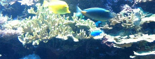 Aquarium is one of Things To Do.