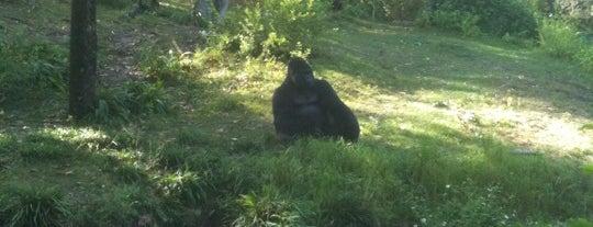 Gorilla Falls Exploration Trail (Pangani) is one of Disney Sightseeing: Animal Kingdom.