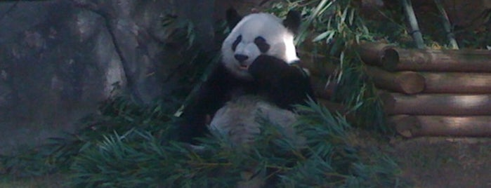 Panda Exhibit is one of Taniaさんのお気に入りスポット.