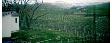 Wine Trip: Washington (2nd US wine country)