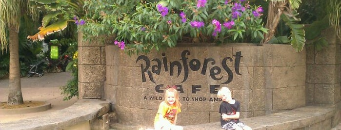 Rainforest Café is one of Disney Sightseeing: Animal Kingdom.