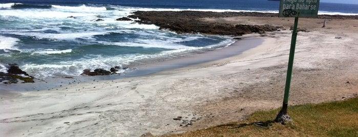 Playa Brava is one of Beaches in Arica.
