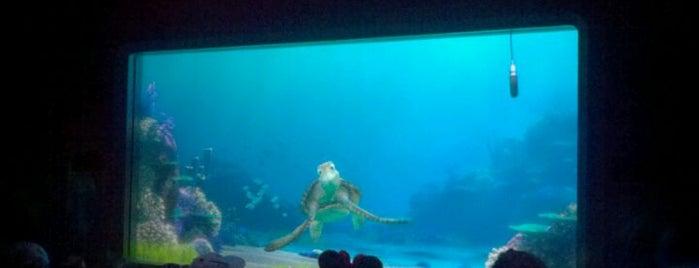 Turtle Talk with Crush is one of My vacation @Orlando.