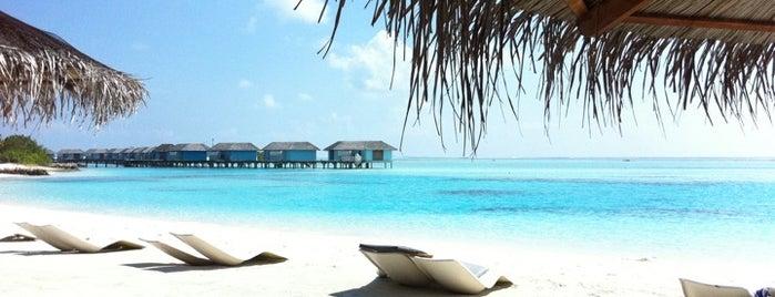 Chaaya Island Dhonveli Resort is one of Locais curtidos por Andriy.