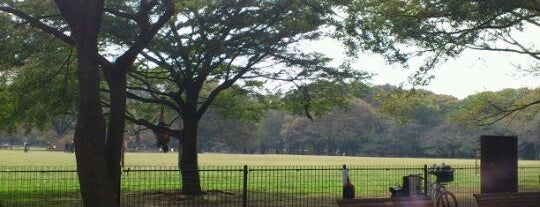 Yoyogi Park Dogrun is one of Tokyo as a local.