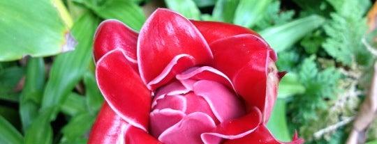 Flecker Botanic Gardens is one of World TOUR 🌏.