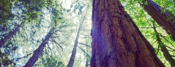 Muir Woods National Monument is one of SF Bay Area.