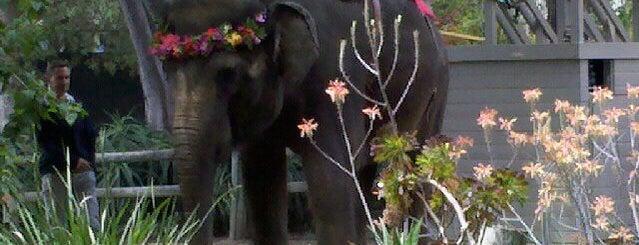 Santa Ana Zoo is one of Zoos/Aquariums in CA.