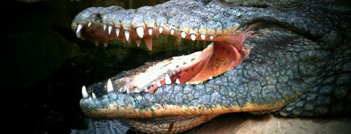 Krokodillenrivier is one of Diergaarde Blijdorp 🇳🇬.