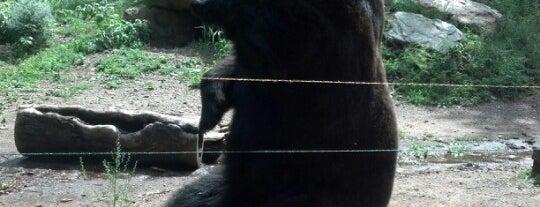 North American Bear Center is one of Locais salvos de Jenny.