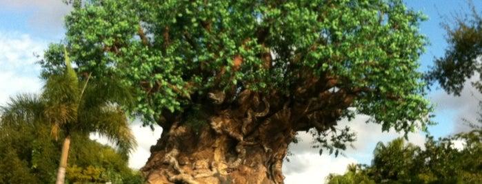 Disney Sightseeing: Animal Kingdom