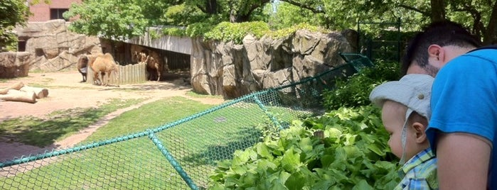 Lincoln Park Zoo is one of 101 places to see in Chicago before you die.