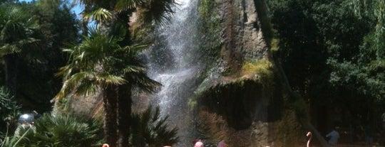 Zoo de La Palmyre is one of France.