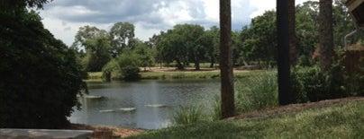 Sawgrass Marriott Golf Resort and Spa is one of Foodie : понравившиеся места.