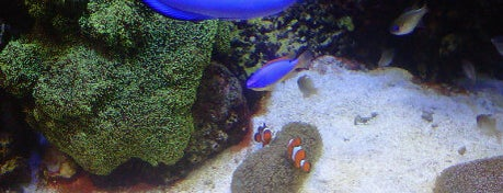 Monterey Bay Aquarium is one of Zoos/Aquariums in CA.