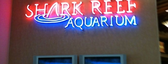 Shark Reef Aquarium is one of Vegas Bound Bitches 13'.
