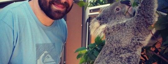 Taronga Zoo is one of Australia and New Zealand.