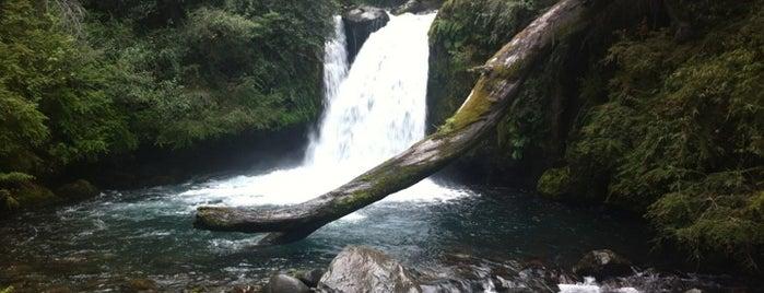 Parque Nacional Puyehue is one of Patagonia (AR).