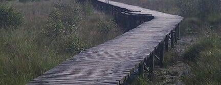 Nationaal Park De Groote Peel is one of Netherlands.