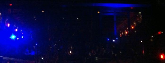 Anjelique is one of Oo Nights!!.