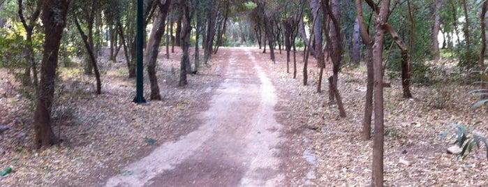 Άλσος Αιγάλεω Μπαρουτάδικο is one of Tempat yang Disukai maria.