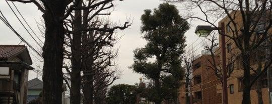 北沢川緑道 ユリの木公園 is one of せたがや百景 100 famous views of Setagaya.
