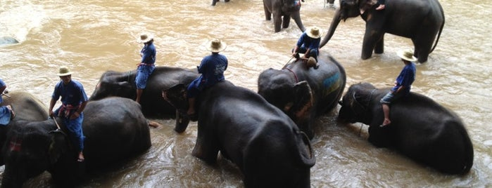 Maetaman Elephant Camp is one of Places in and near Chiang Mai.