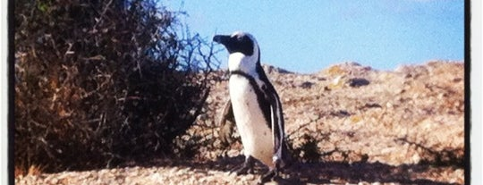 Boulders Beach is one of South Africa recommendations.
