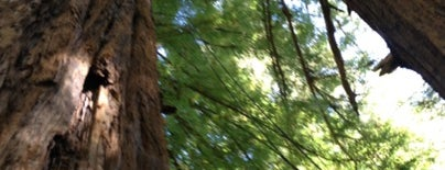 Mount Hermon Redwood Canopy Tours is one of Lugares guardados de Theron.