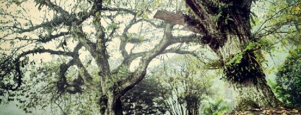Rio Grande da Serra is one of Cidades.