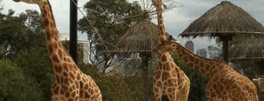 Taronga Zoo is one of Things that makes Sydney so great.