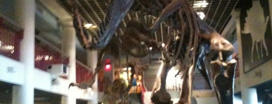 The Academy of Natural Sciences of Drexel University is one of Philadelphia's Best Museums - 2012.