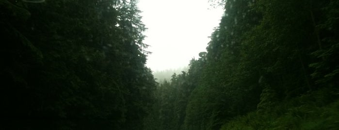 Olympic National Park is one of Best Places to Check out in United States Pt 4.
