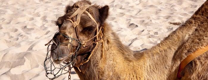Oasis Park Fuerteventura is one of Urlaub mit dem Mietwagen: Fuerteventura.