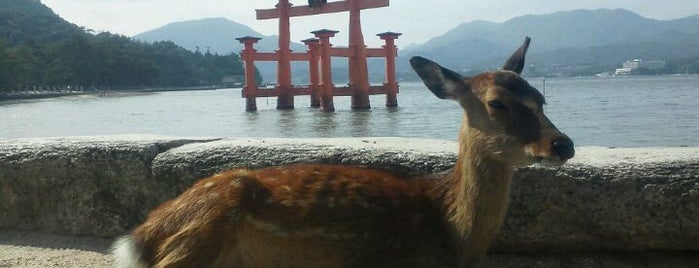 Itsukushima-jinja Shrine is one of Go Ahead, Be A Tourist.