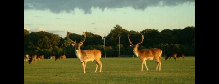 Phoenix Park is one of The Ultimate Guide to Dublin.