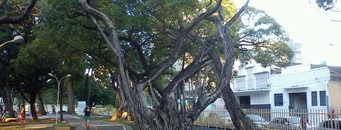 Parque 13 de Maio is one of Locais Favoritos em Recife.