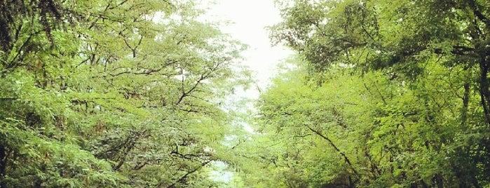 İTÜ Ağaçlı Yol is one of Tempat yang Disukai Burak.