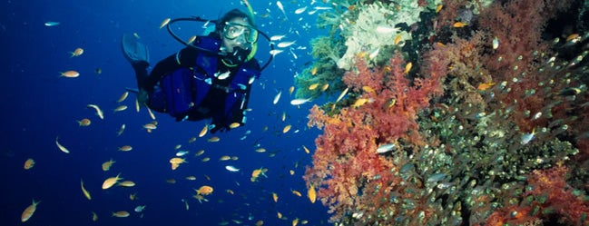 Bunaken National Maritime Park is one of Scuba Diving Indonesia.