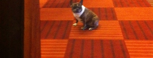 Harbor Court Hotel is one of Pet Friendly Destinations.