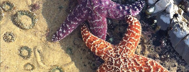 Crystal Cove tidal pools is one of OC Extraordinaire.
