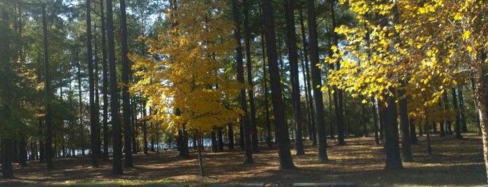 Harris Lake County Park is one of Olesya: сохраненные места.