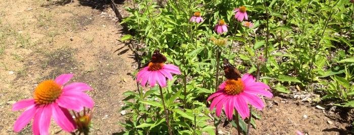 Lady Bird Johnson Wildflower Center is one of Austin.