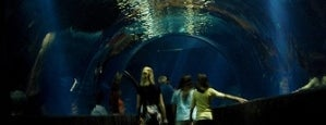 Oklahoma Aquarium is one of Kid Tested, Parent Approved.